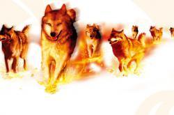 火狼—— 一个陶瓷营销团队的故事(1)