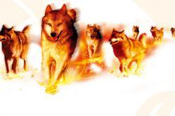 火狼—— 一个陶瓷营销团队的故事(2)