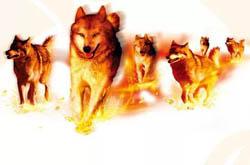 【连载】火 狼——一个陶瓷营销团队的故事(2014)⑥