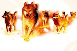 【连载】火 狼——一个陶瓷营销团队的故事(2014)⑲