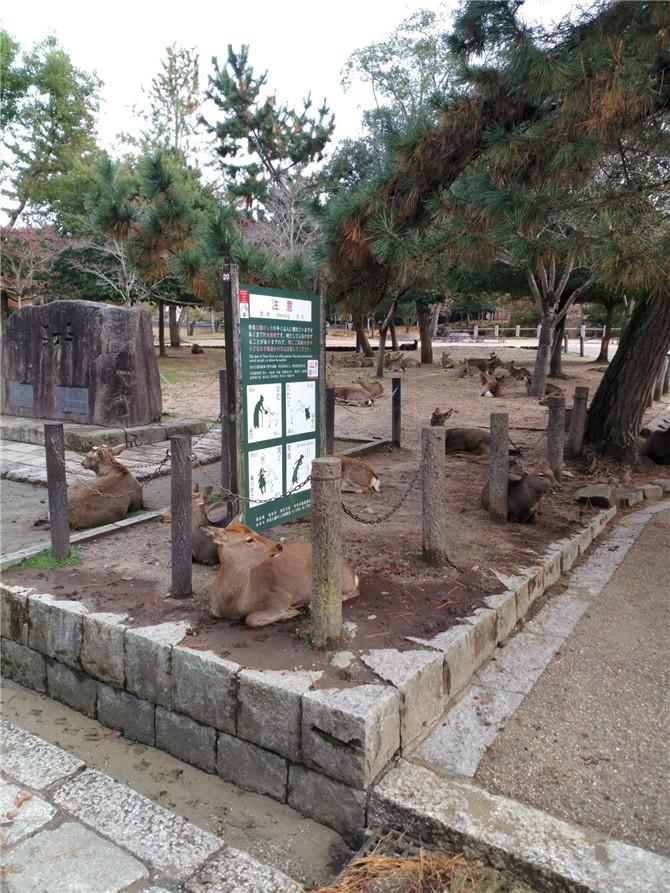 5东大寺最不缺的就是小鹿.jpg